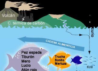 mercurio en el pescado